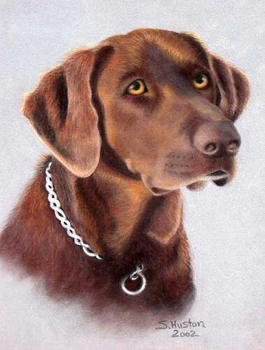 Custom Pet Portraiture Dog Amp Cat Portraits By New