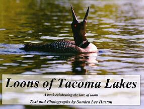 Loons of Tacoma